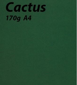 125 feuilles Cactus