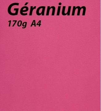 125 feuilles Géranium